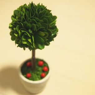観葉植物 FYI00447605