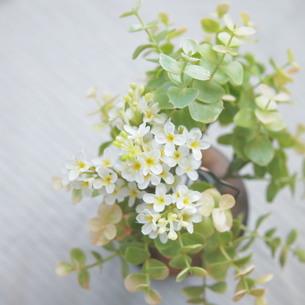 花を飾ろう FYI00447631