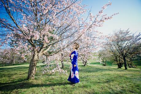 桜の木の下で着物を着ている女性 FYI00447918