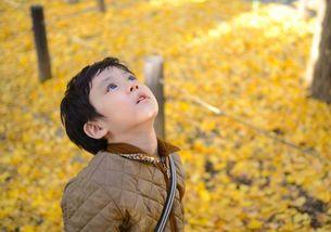 イチョウ落ち葉と子供 FYI00448789