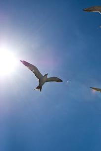 海鳥 FYI00449370