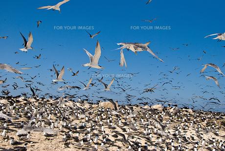 海鳥 FYI00449377