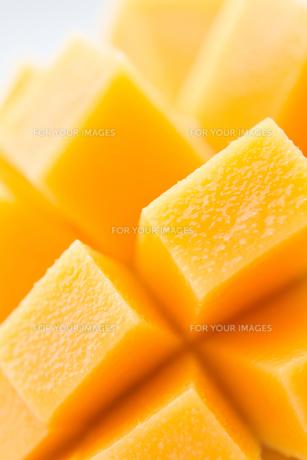 mango FYI00451420