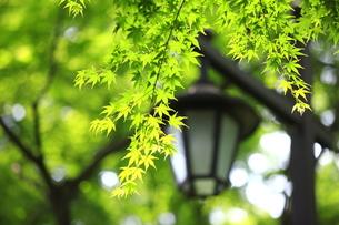 新緑のイメージ FYI00451513
