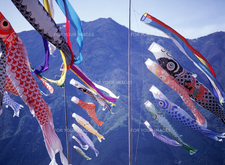 鯉のぼり FYI00453011