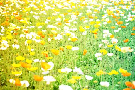 お花畑 FYI00456506