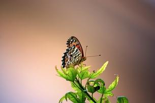 葉っぱの上の蝶々 FYI00458513