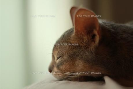 疲れたネコ FYI00461657