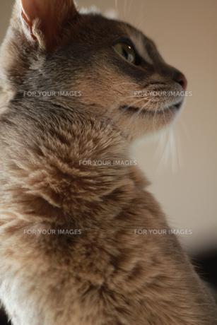 猫 俯瞰 FYI00461662