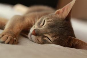 昼寝をするネコ FYI00461672