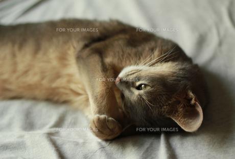 まぶしそうなネコ FYI00461675
