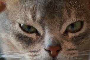 猫 寄り 望遠 FYI00461678