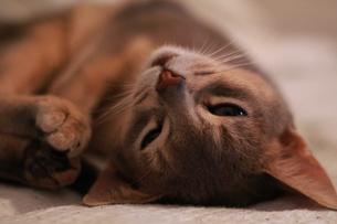 寝転ぶネコ FYI00461681