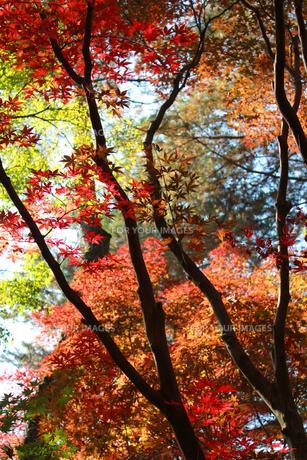 秋の紅葉 FYI00461691