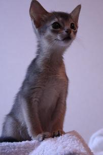 子猫 縦位置 FYI00461704