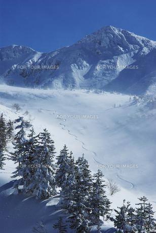 樹氷とシュプール FYI00464309