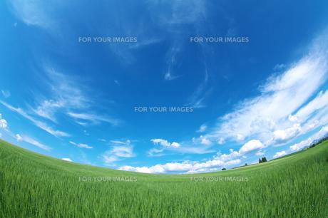 麦畑と青空 FYI00464354