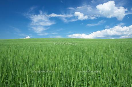 右畑と青空 FYI00464363