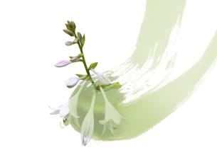 ギボウシの花 FYI00466119