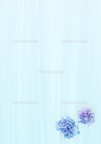 雨とアジサイの花 FYI00466146