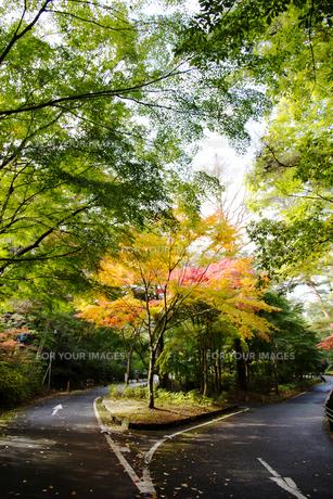 秋の紅葉の神戸再度公園 FYI00467236