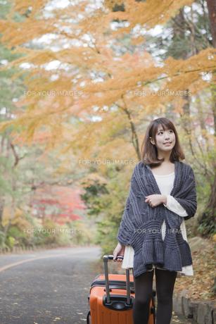 秋の紅葉した公園でトランクを引いている女性 FYI00467295