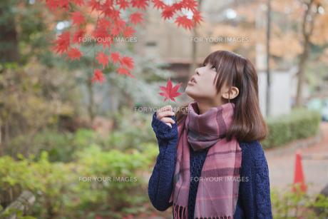 秋の公園で紅葉を眺める女性 FYI00467378