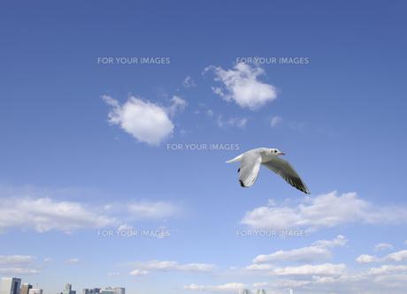 東京港を飛ぶユリカモメ FYI00469839