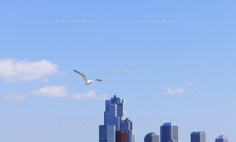 かもめ飛ぶ聖路加タワーとリバーシティ21 FYI00470132