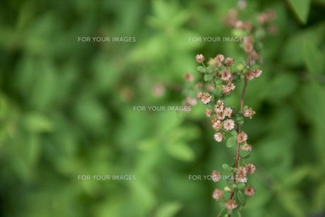 小さな花が咲く植物 FYI00470270