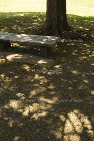 木漏れ陽とベンチ FYI00470275
