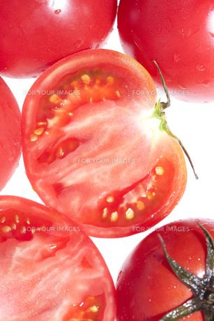 トマト FYI00470288