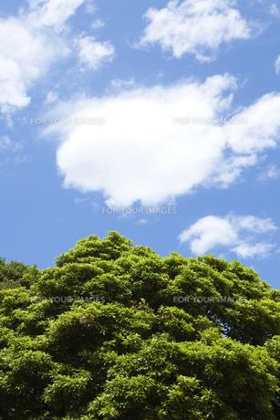 青い空と雲と木 FYI00470291