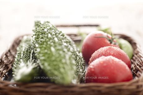 水滴のついたトマト、ゴーヤ FYI00470459