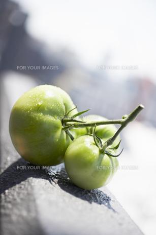 コンクリートの上の緑のトマト FYI00470534