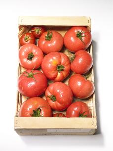 ダンボールの中のトマト FYI00470626