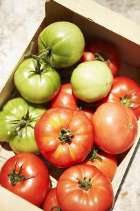 木箱の中のトマト FYI00470627