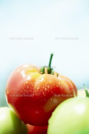 水滴のついたトマト FYI00470642