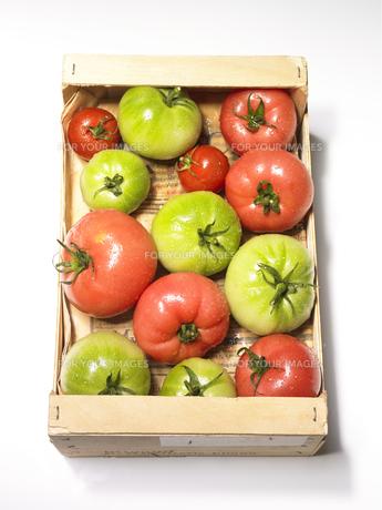 ダンボールの中のトマト FYI00470643