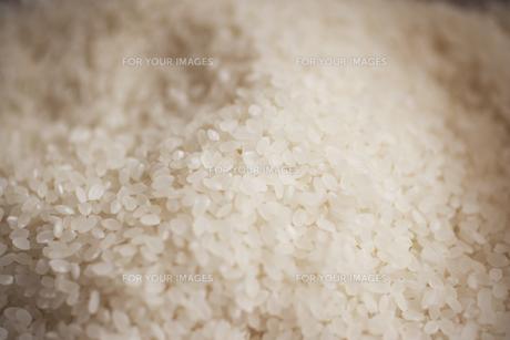 米粒 FYI00470648