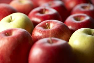 並べたりんご FYI00470764