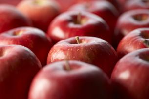 並べたりんご FYI00470765