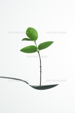 スプーンの上の緑の葉 FYI00471022