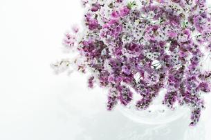 スターチスの花束 Fyi00471078 気軽に使える写真イラスト素材