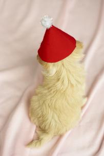 帽子をかぶる子犬 FYI00471252