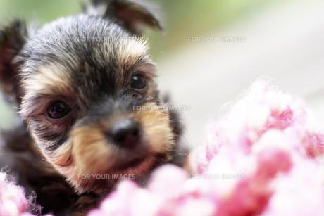 デッキに座る子犬 FYI00471538