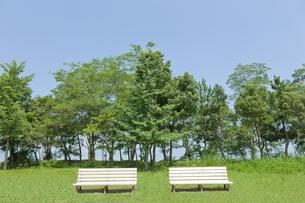 2つのベンチ FYI00474017