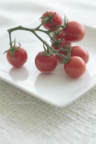 お皿の上のプチトマト FYI00474313
