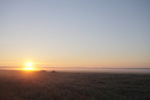 サロベツ原野の日の出 FYI00474390