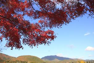嵐山の紅葉 FYI00474558